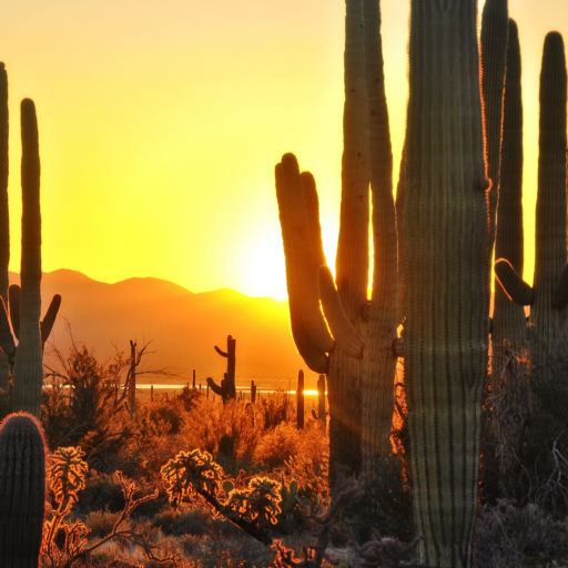 The Best of Tucson - Saguaro National Park